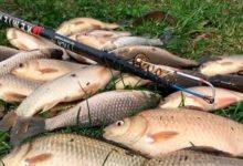 Photo of Лучшие активаторы клева для рыбалки